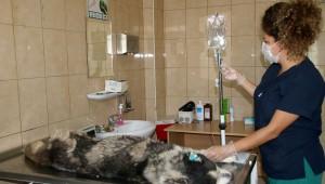 Çankaya Belediyesi Sahipsiz Sokak Hayvanları Bakım ve Rehabilitasyon Merkezi, sokak hayvanlarının geçirebileceği en ağır hastalıklardan bulaşıcı tümör tedavisini uygulayarak amansız hastalığa çare olmaya çalışıyor.