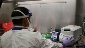 ABD ordusu: Koronavirüs aşısı farelerde denenmeye başlandı