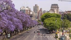 Buenos Aires sokakları ilkbaharda Jakaranda ağaçlarının renklerine bürünüyor