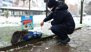 Bağcılar Belediyesi, sokak hayvanları için seferber oldu