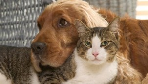 İngiltere'de hayvanlara kötü muameleye 5 yıl hapis cezası