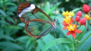 Ekolojik yıkım: Biyokaçakçılık