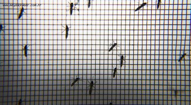 Hindistan'da 14 kişide Zika virüsü görüldü