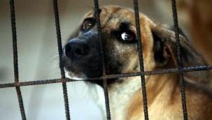 Hayvanları Koruma Kanunu kapsamında ilk hapis istemi