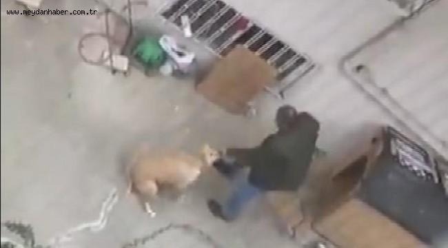 Kendi köpeğine yumruk atan zanlıya 1500 lira ceza