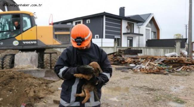 Sondaj çukuruna düşen yavru köpek kurtarıldı